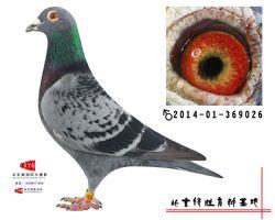 2014-01-369026雄副本