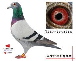 2014-01-369031雌副本
