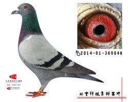2014-01-369046雄副本