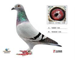 CHN2015-王府鸽苑-140