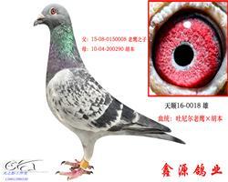 吐尼尔老鹰X胡本,0018