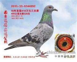 天池092【此鸽已拍卖】