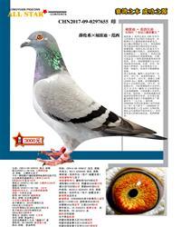 福雷迪・范西兄弟(速霸龙) 7
