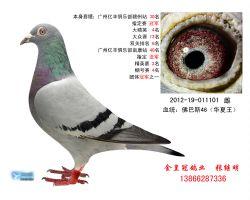 CHN12-19-011101