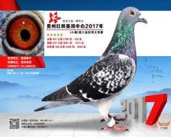 郭氏天马723合作鸽友拍回