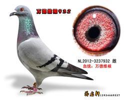 万德维根种鸽3237932