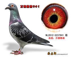 万德维根种鸽3237941