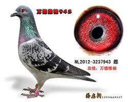 万德维根原舍种鸽3237943