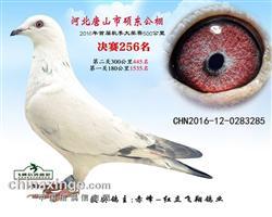 2016年秋唐山硕东公棚入赏鸽
