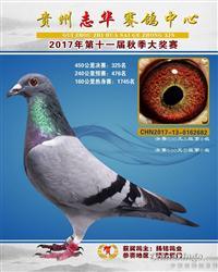 贵州志华赛鸽中心2017年秋季325名
