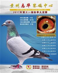 贵州志华赛鸽中心2017年秋季17名