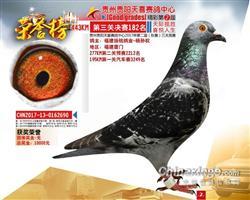贵州贵阳天喜赛鸽中心182名