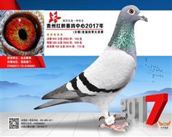 贵州红枫赛鸽中心2017年144名《已售