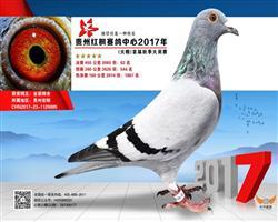 贵州红枫大棚455公里62名