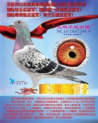 中欧赛鸽文化交流中心