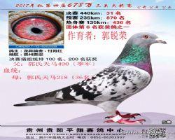郭氏天马558合作鸽友拍回