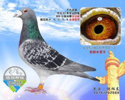 91-CHN2005-32-847779_副本