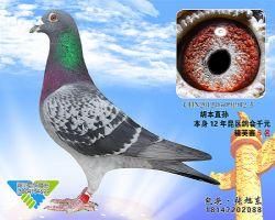 88-CHN2012-05-091912_副本