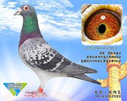 85-CHN2008-05-047918_副本