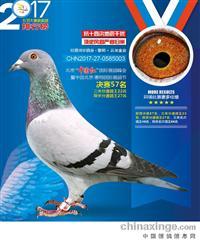北京惠翔国际信鸽产业园