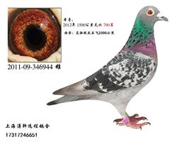 国血吴淞944