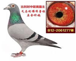 """戈马力""""金环号387""""直子(已售)"""