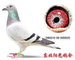38、CHN2016-08-0089020副本