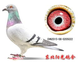 74、CHN2015-08-0205022副本