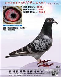 贵州平翔赛鸽中心2017年98名
