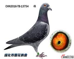 马克罗森斯北京开创二关58名三关71