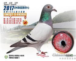 贵州翠枫园2017年赛鸽中心201名