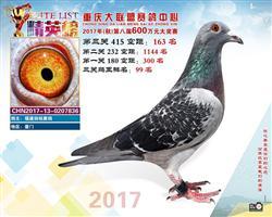 重庆大联盟2017年赛鸽中心163名