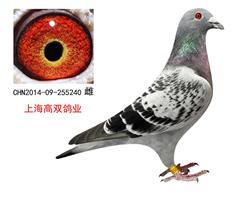 上海高双鸽业