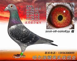 2016年秋黑龙江天一俱乐部五关冠军