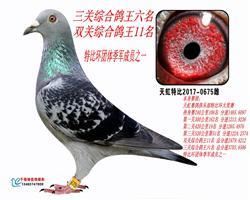 天虹三关综合鸽王六名