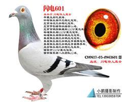 桑杰士 �W��魅酥迸�601