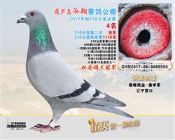2017年葫芦岛鸿翔公棚双鸽王冠军