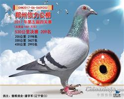 2017年郑州信力公棚决赛209名