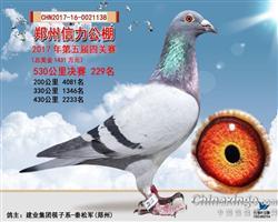 郑州信力公棚决赛229名