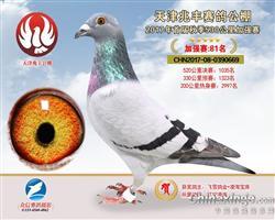 天津兆丰公棚获奖鸽