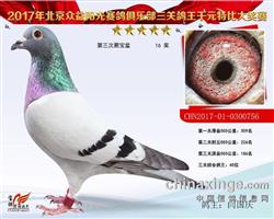 三关综合鸽王45名0300756