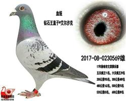 【五关鸽王11名】极品雄
