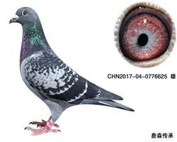 CHN2017-04-0776625