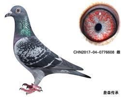 CHN2017-04-0776608