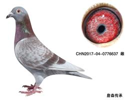 CHN2017-04-0776637