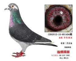 超�h程老��血李�B�S���N��3