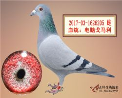 ��X戈�R利205