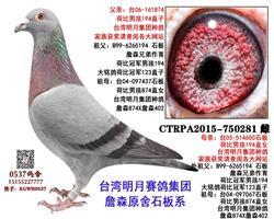 台湾明月詹森石板  750281