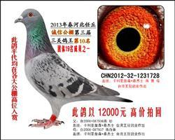 2013年诚信公棚决赛三关鸽王10名