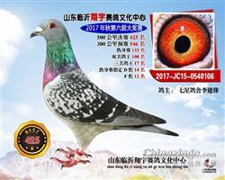 17山东临沂翔宇三关鸽王17名